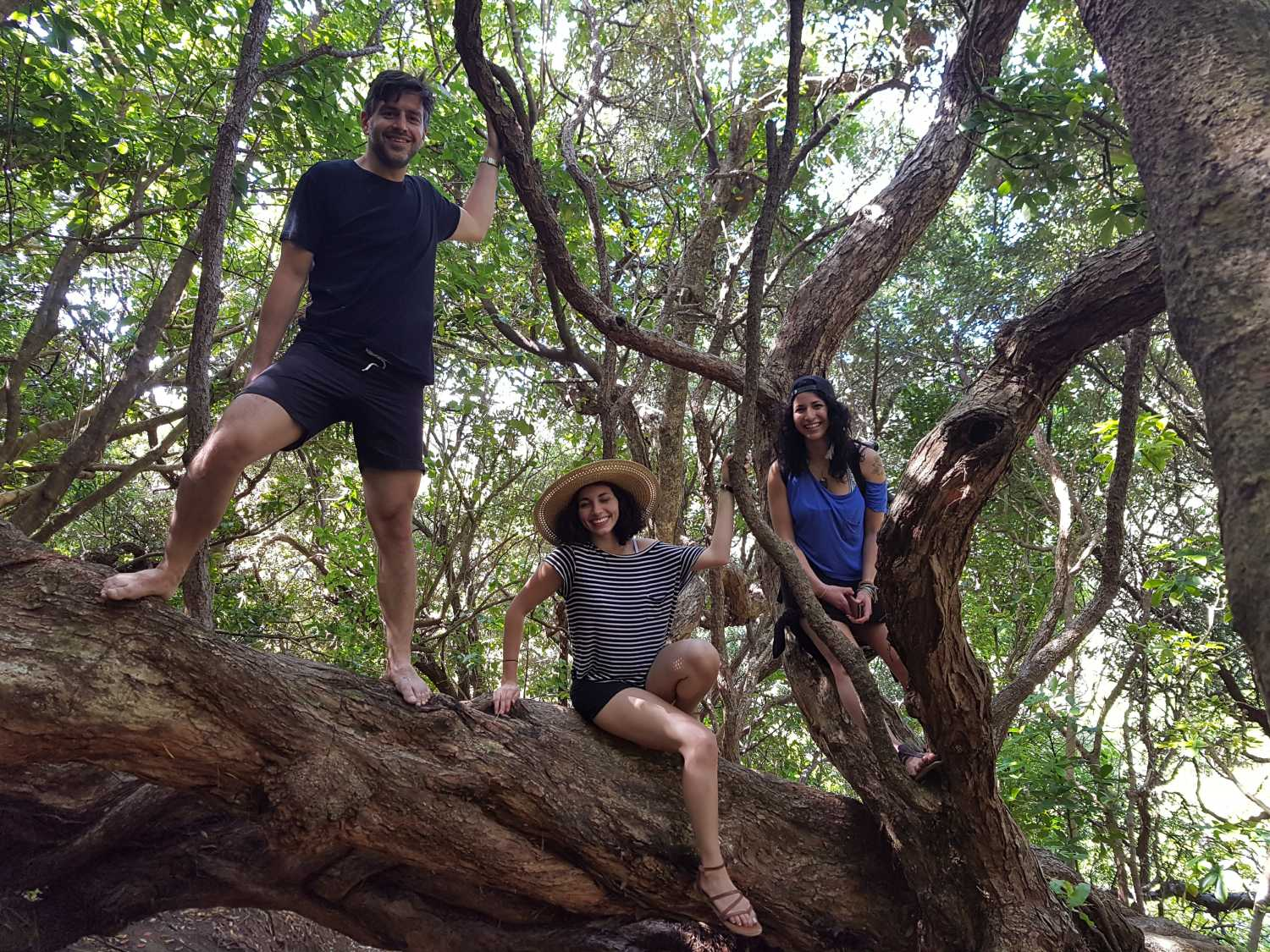 Group climbs a tree at Anawhata