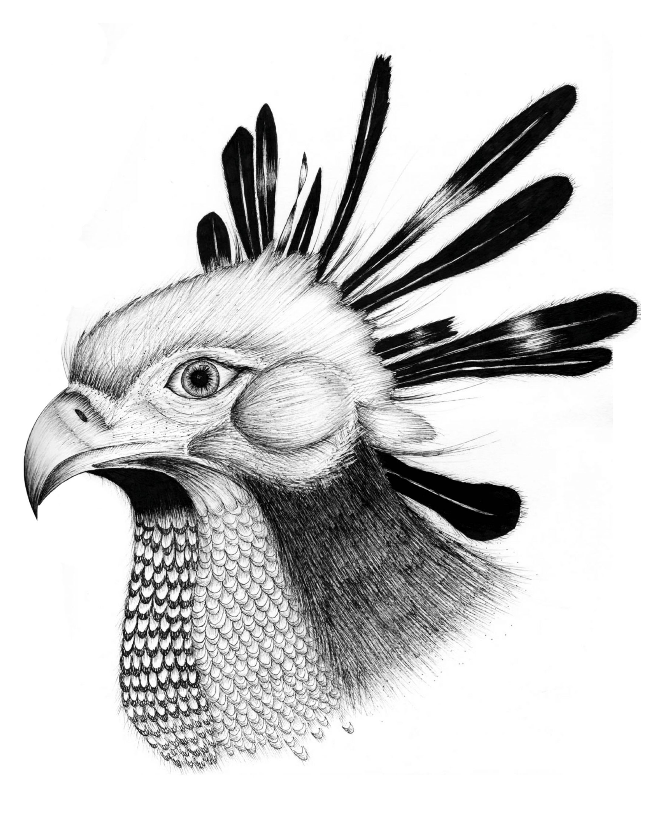Go to detail page Secretary bird