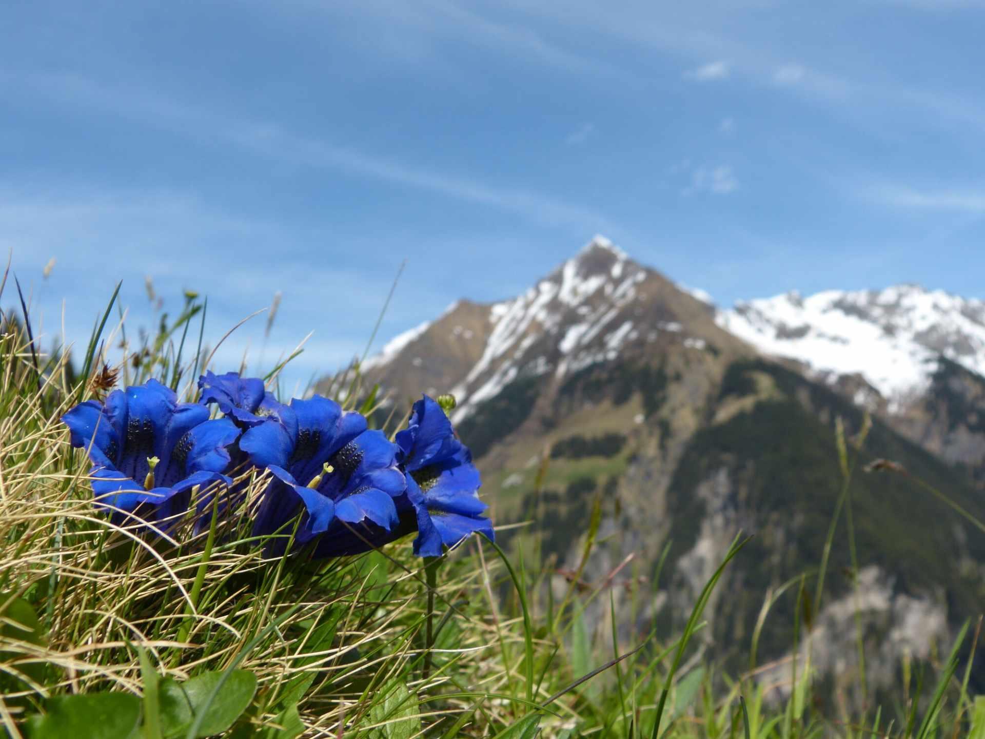Blick auf die Berge im Naturpark Zillertaler Alpen