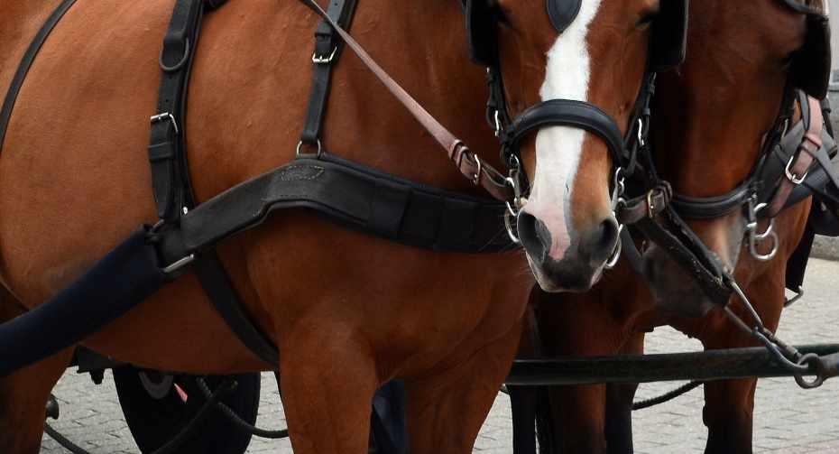 Pferdekutsche im Zillertal