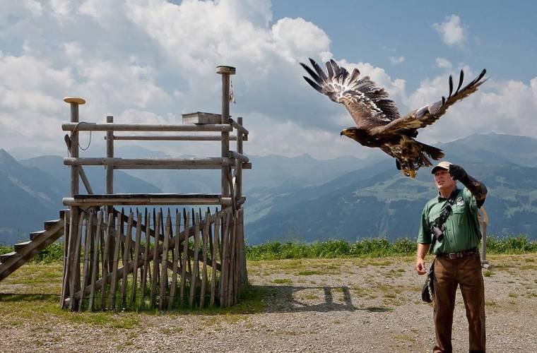 Adlerbühne Ahorn