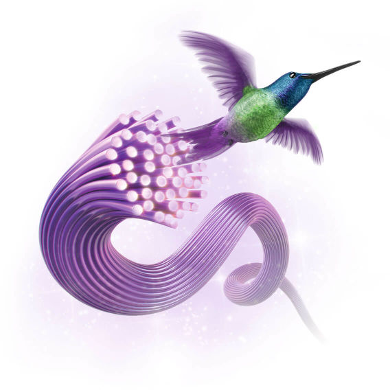 Hummingbird next to purefibre wires