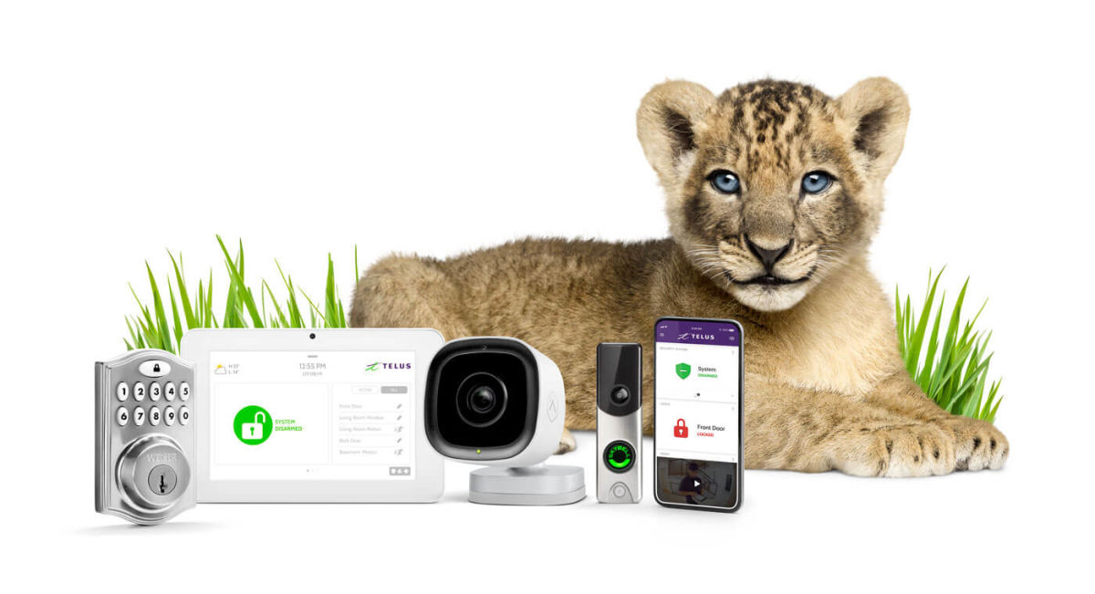 SmartHome Security cub lion with security products
