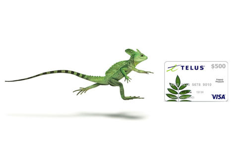Save on TELUS Plans - Phone, Internet, TV Deals & Bundles