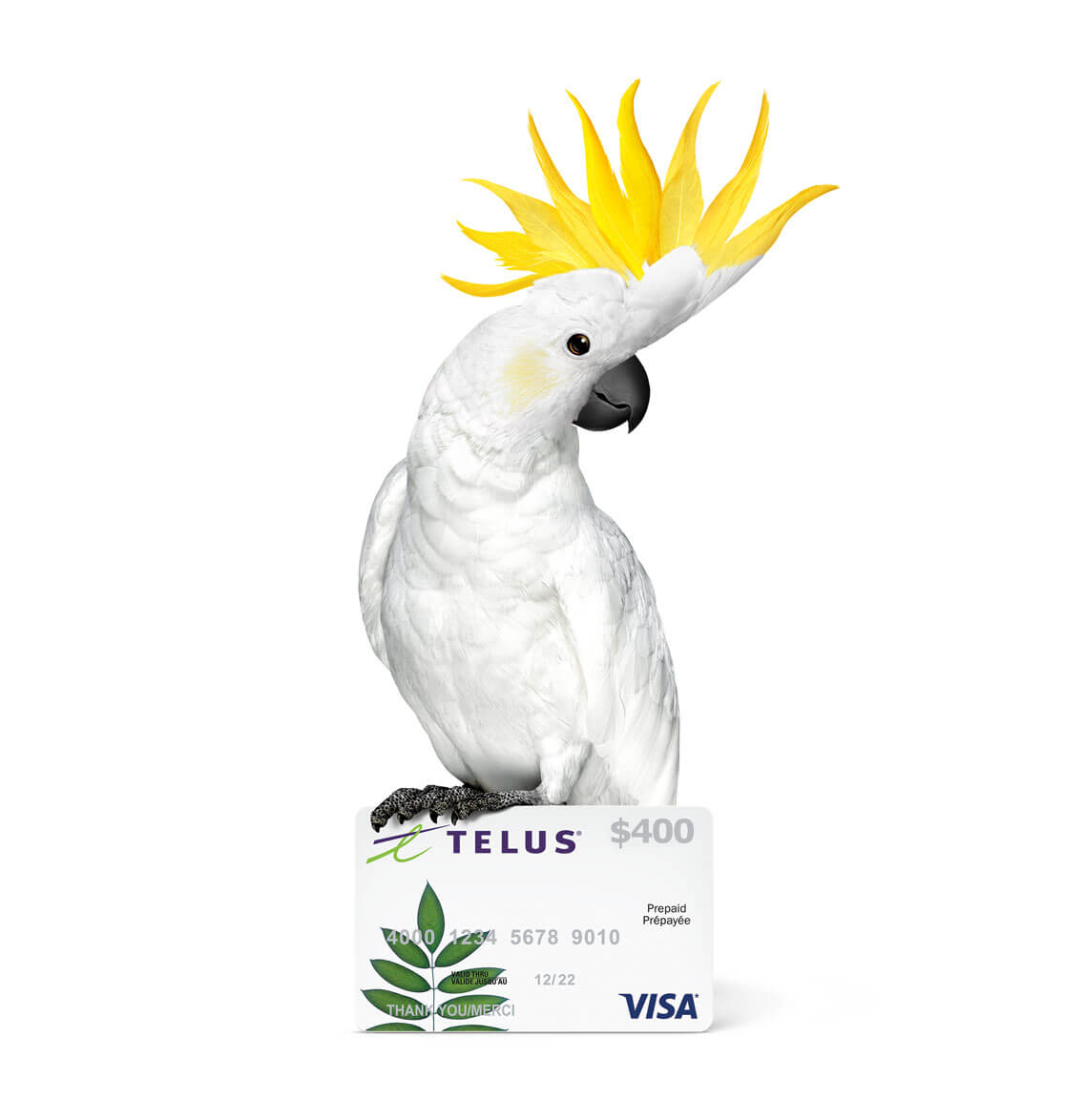 Cockatoo GiftCard 400 1136@2x
