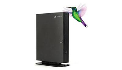 internet-bird