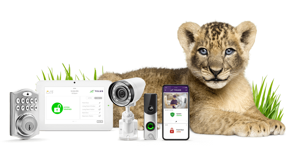 TELUS SmartHome Security Cub Lion