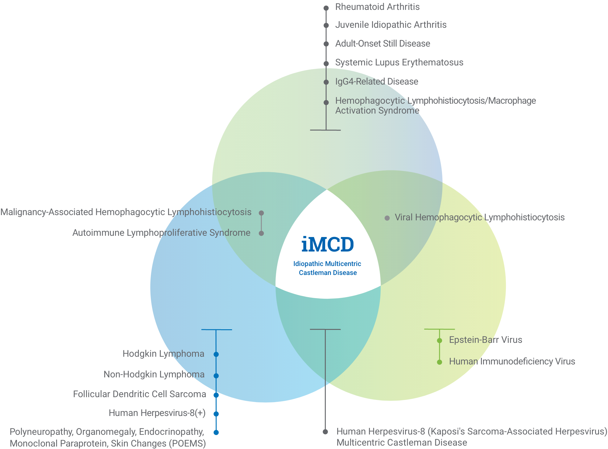 Venn diagram explaining how idiopathic multicentric Castleman disease, or iMCD, can be confused for autoimmune conditions, infections, and malignancies. Expanded state.