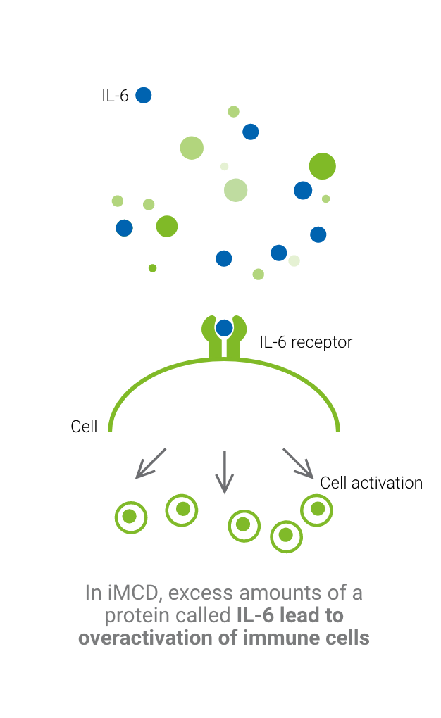 Graphic showing how excess amount of IL-6, found in people with idiopathic multicentric Castleman disease, can lead to the overactivation of immune cells.