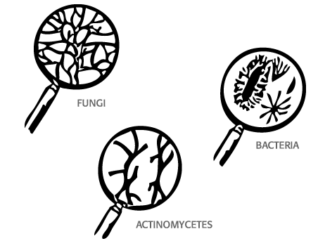 toprak organizmaları