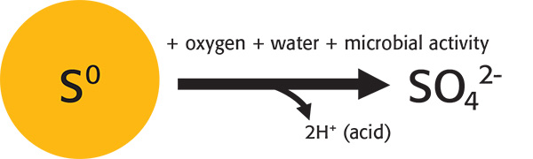 Fig. 1: The reaction of elemental S (S⁰) oxidation to sulfate (SO₄²⁻).