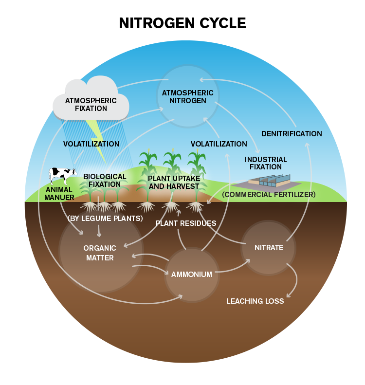 updated-nitrogen-cycle