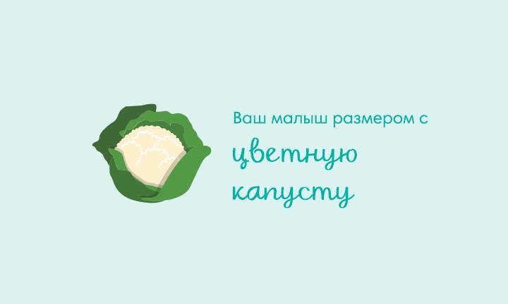 27-я неделя беременности  Ваш малыш размером с  цветную капусту