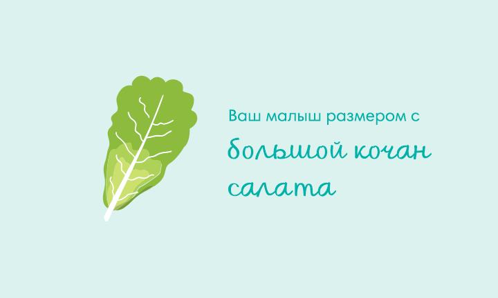 36-я неделя беременности  Ваш малыш размером с  большой кочан салата