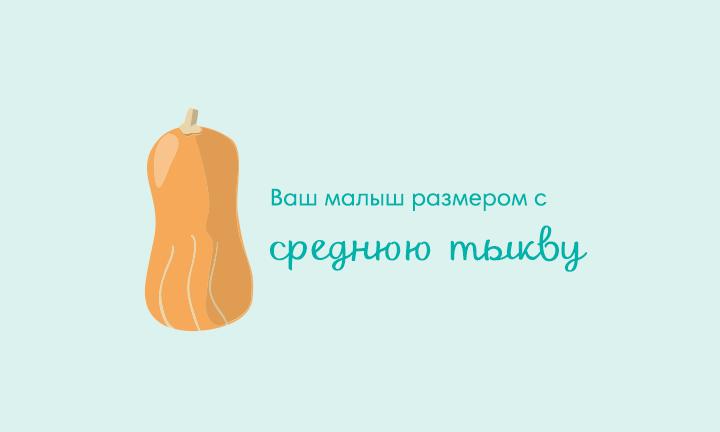 29-я неделя беременности  Ваш малыш размером со  среднюю тыкву