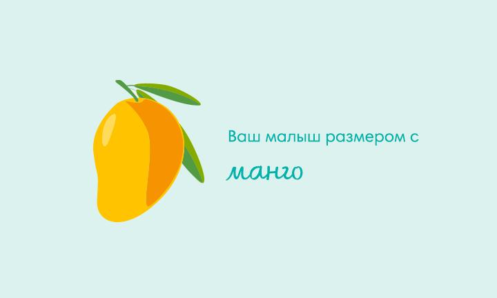 19-я неделя беременности  Ваш малыш размером с  манго