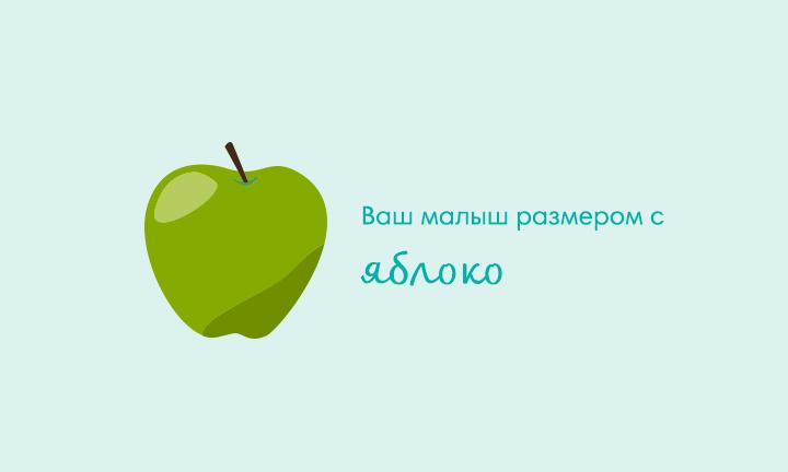 16-я неделя беременности  Ваш малыш размером с  яблоко