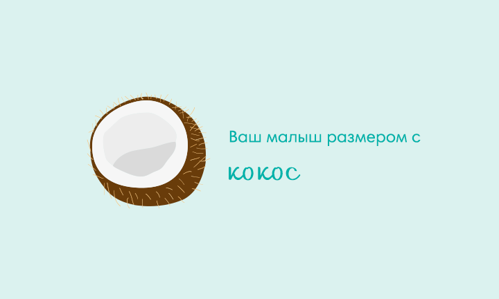 31-я неделя беременности  Ваш малыш размером с  кокос