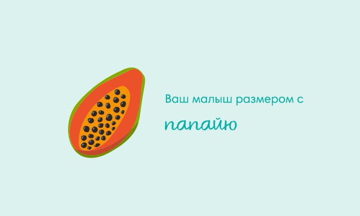 22-я неделя беременности  Ваш малыш размером с  папайю