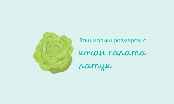 28-я неделя беременности  Ваш малыш размером с  кочан салата латук