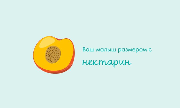 14-я неделя беременности  Ваш малыш размером с  нектарин
