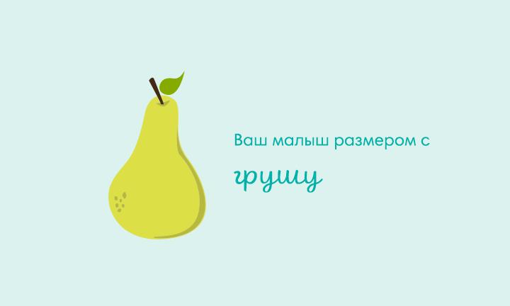 17-я неделя беременности  Ваш малыш размером с  грушу
