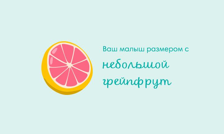 15-я неделя беременности  Ваш малыш размером с  небольшой грейпфрут