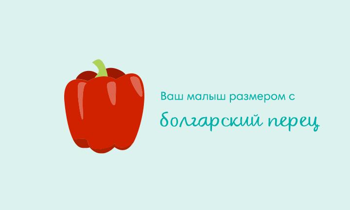 20-я неделя беременности  Ваш малыш размером с  болгарский перец