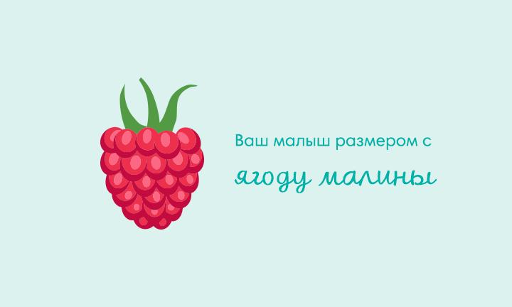 Восьмая неделя беременности  Ваш малыш размером с  ягоду малины