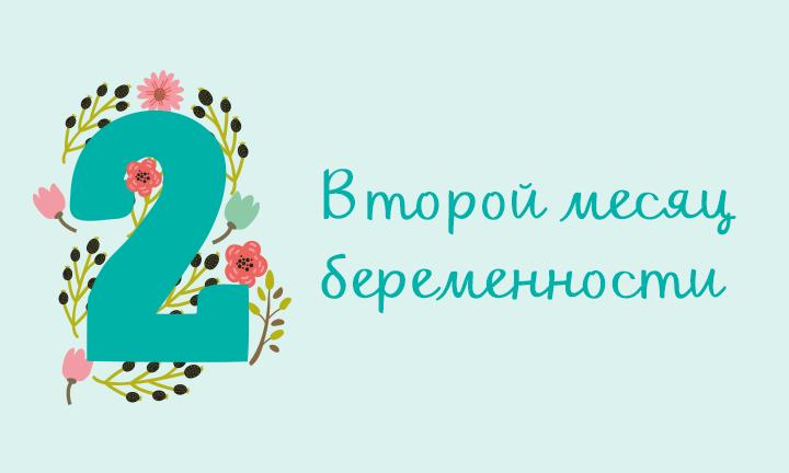 Беременность месяц за месяцем: второй месяц