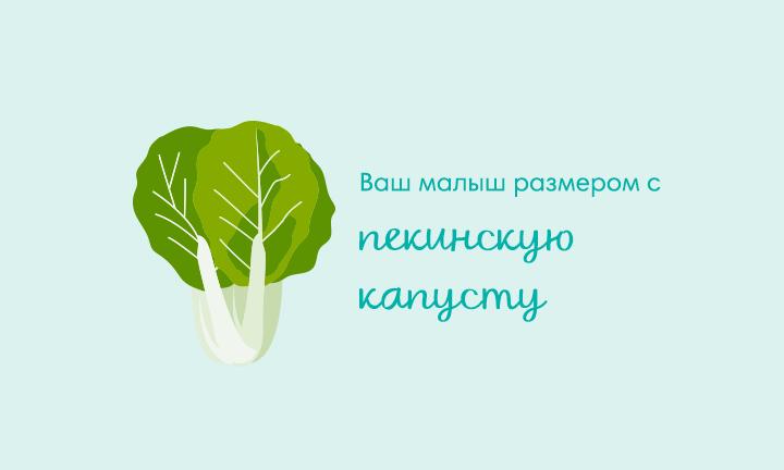 32-я неделя беременности  Ваш малыш размером с  пекинскую капусту