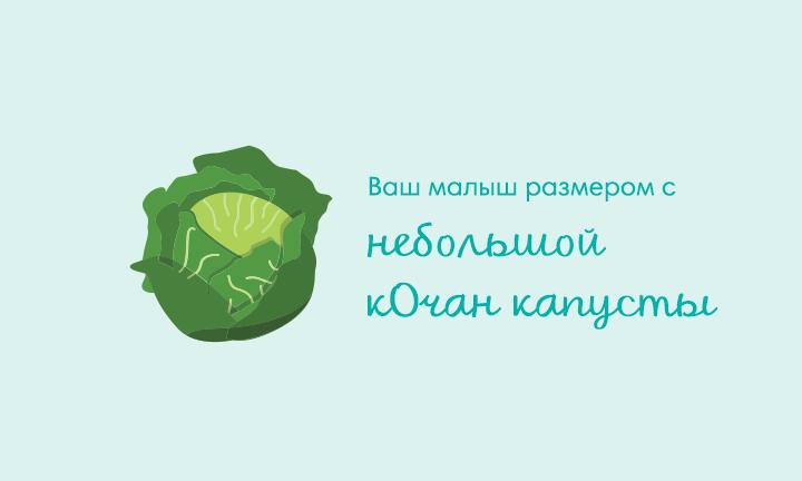 30-я неделя беременности  Ваш малыш размером с  небольшой кОчан капусты