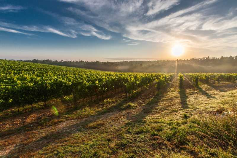 The Best Places for Wine Tasting in France
