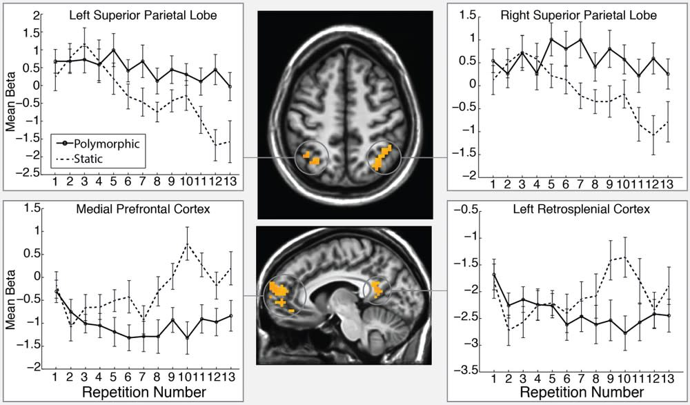 """<i>Anderson el al.""""How polymorphic warnings reduce habituation in the brain: Insights from an fMRIstudy."""" In</i>CHI2015: Proceedings of the 33rd AnnualACMConference on Human Factors in ComputingSystems."""