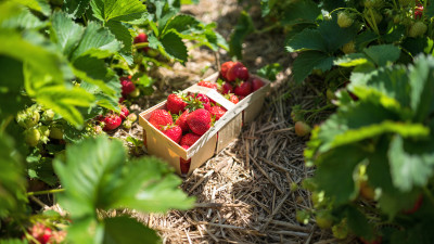 how-to-choose-fruit-plants-for-your-home-garden
