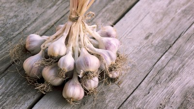 garlic-companion-planting-guide