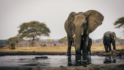 wildlife-preserves-explained