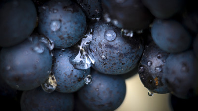 what-is-carbonic-maceration
