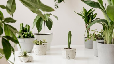 how-to-select-the-right-pot-for-any-plant