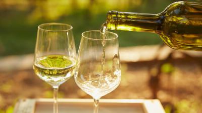 trebbiano-toscano-wine-guide
