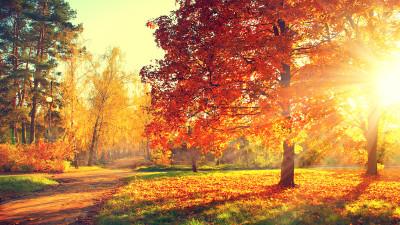 lens flare on an autumn scene