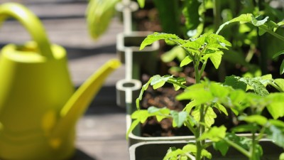 how-to-grow-a-balcony-garden