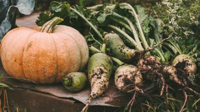 pumpkin-companion-planting-guide