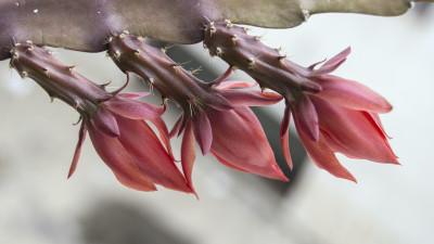 orchid-cactus-care