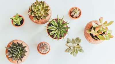 how-to-care-for-succulents