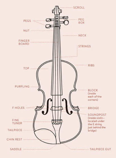 What Are the Different Parts of a Violin and How Do They