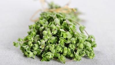 Fresh oregano herb bunch tied