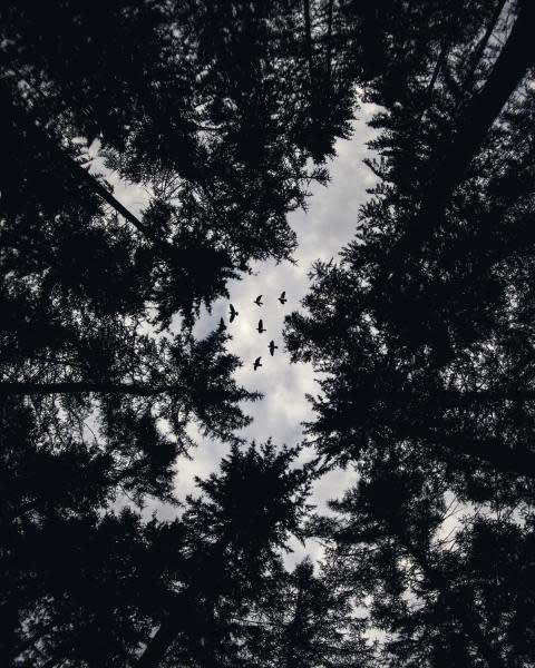 Birds in the sky through trees