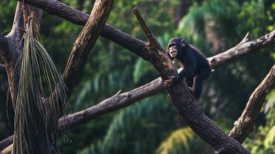 how-humans-differ-from-chimps