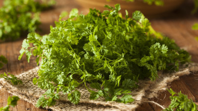 guide-to-cooking-with-chervil